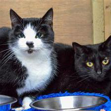Bobbit and Trixie are seeking a home together