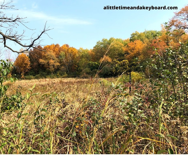 Fall colors enchant at Moraine Hills State Park.