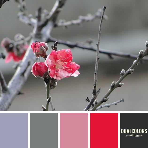 color_paleta_91