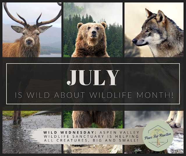 July is Wild About Wildlife Month: Featuring Aspen Valley Wildlife Sanctuary