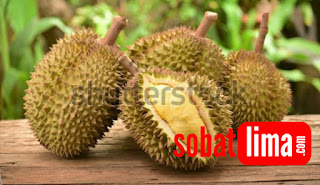 cara memilih durian yang berkualitas,cara memilih durian montong,cara memilih durian tua,cara memilih buah durian yang matang dan manis,cara mengetahui durian matang di pohon,cara memilih durian yang terbaik,cara membedakan durian tua dan muda,memilih durian daging tebalcara pilih durian yang baguspilih durian yang bagus,pilih durian,pilih durian yang enak,tips pilih durian,pilih durian yg bagus,pilih durian montong atau musang king,memilih durian daging tebal,memilih durian manis,memilih durian,memilih durian yang enak,memilih durian yg manis,memilih durian matang,cara memilih durian lokal,cara memilih durian yang legit,cara memilih durian masak,cara memilih durian petruk,cara memilih durian palembang cara memilih durian yang tebal dan manis,cara memilih durian yang tebal dagingnya