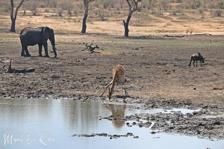Fauna en Mazithi Dam, Kruger