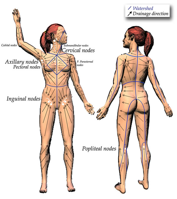 Lymphatic drainage map