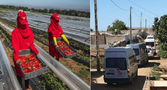 """مفاجأة.. مسير معمل الفراولة الإسباني: """"ها شكون جاب الفيروس لمنطقة """"لالة ميمونة"""" والمعمل ديالنا"""""""