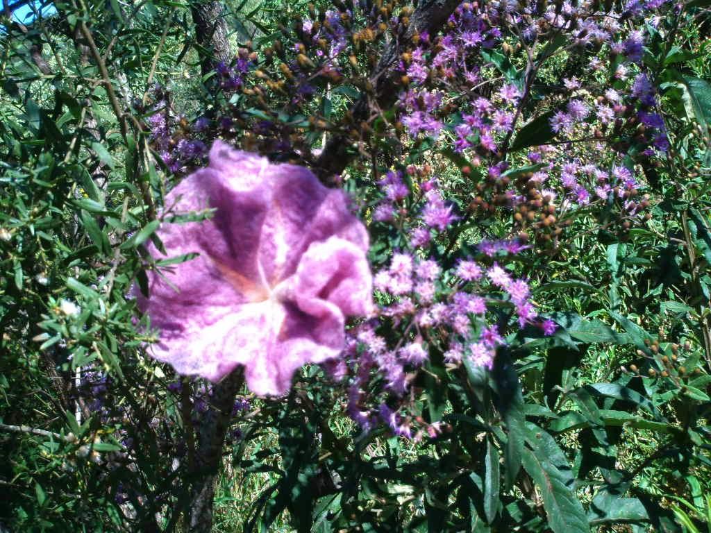 flor feltrada rosa no meio das flores