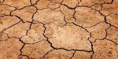 Koloid tanah dan bahan organik memiliki peran penting dalam mengatur pertumbuhan tanaman. Bahan organik mengandung unsur hara yang kompleks sehingga menyediakan unsur hara dalam memacu pertumbuhan tanaman. Ketersediaan zat organik yang seimbang di dalam tanah menentukan kehidupan tanaman.