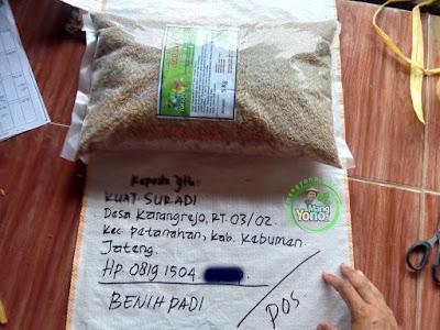 Benih Padi Pesanan KUAT SURADI Kebumen, Jateng.   Benih Sebelum di Packing.