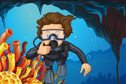 Let's explore the sea of Nusa Penida with Penida Dive Adventure!