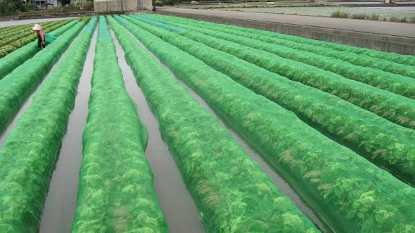 梅雨鋒面氣象預警 台中農改場籲請農友戒備作物防雨
