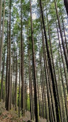 nature woods