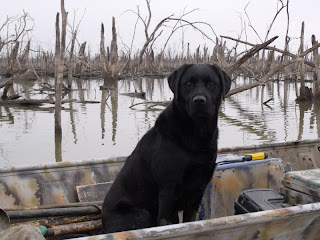 "alt=""North Texas Retriever Trainers dog in boat"""