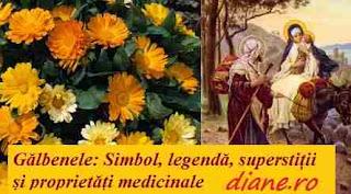Gălbenelele: Simbol, legendă, superstiții și proprietăți medicale