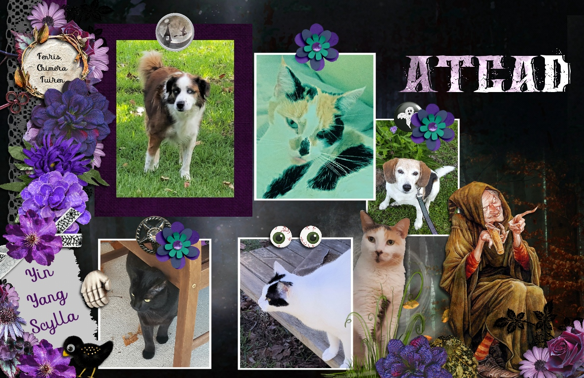 Alasandra, The Cats & Dogs