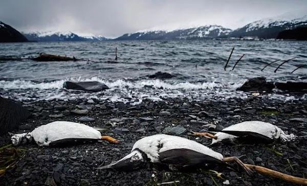 ALARMANTE: Las aves marinas han desminuido un 70%