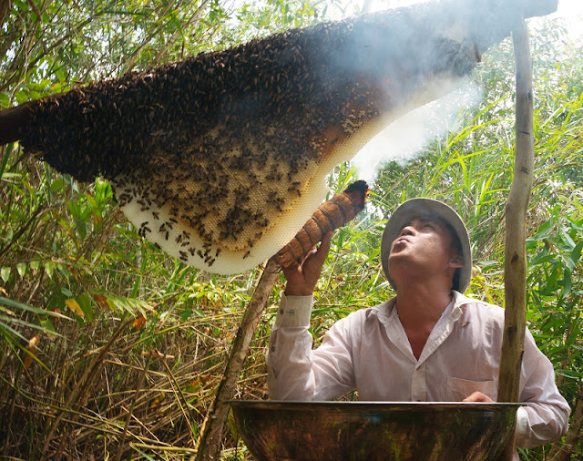 Discovering honey-harvesting tour in U Minh Ha Forest 2