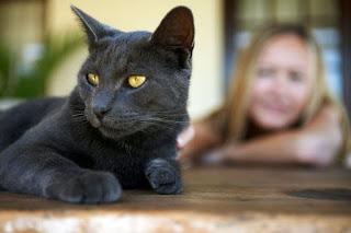 ¿Cómo hacer que mi gato me escuche?