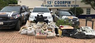 Chapada: Mais de 160 quilos de maconha são apreendidos em Seabra
