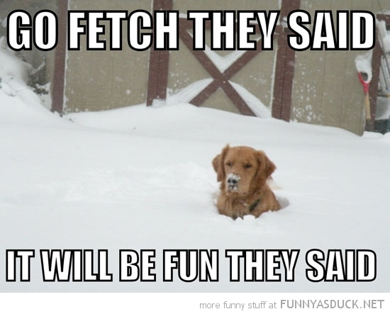 Grey Horse Matters: Snowy Humor
