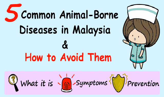 5 Common Animal-Borne Diseases in Malaysia and How to Avoid Them #infographic