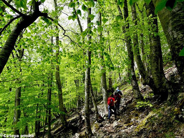 Cruzando un hayedo en la senda de la Jocica en Picos de Europa.