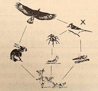 soal un biologi tentang ekosistem