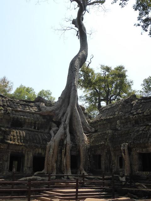 Ta Prohm Temple Tree, Cambodia, Angkor Wat Temple Complex