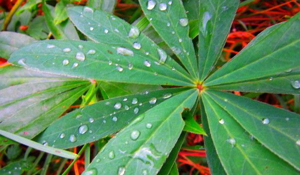 Dew on the leaves of plant