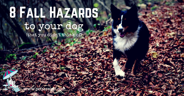 Fall Hazards Dogs