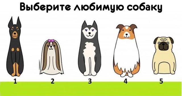 Выберите собаку и узнайте, что для вас важно в жизни!