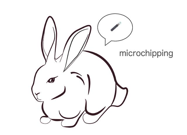 うさぎとマイクロチップ