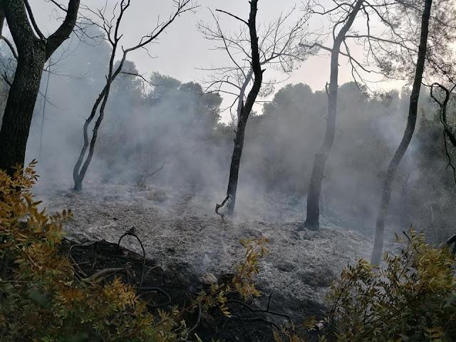 Αργολίδα: Υπό έλεγχο η πυρκαγιά στο Δορούφι Κρανιδίου