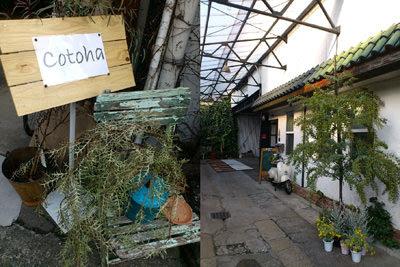 Cotoha Plants&Antiques