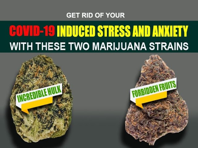 Get rid of your CoVID 19 induced stress and anxiety with these two marijuana strains