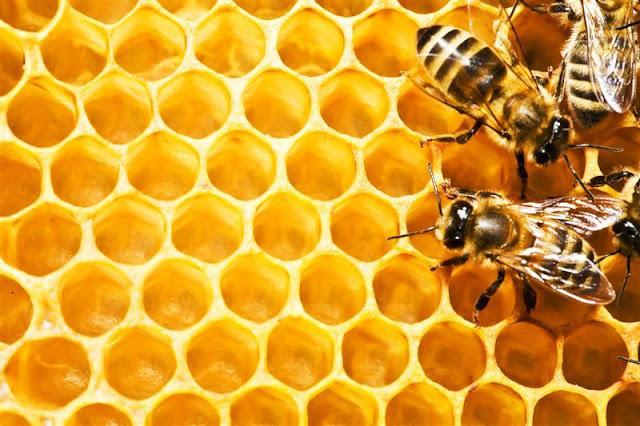 Ζητείται πωλητής ή πωλήτρια σε μελισσοκομικό κατάστημα