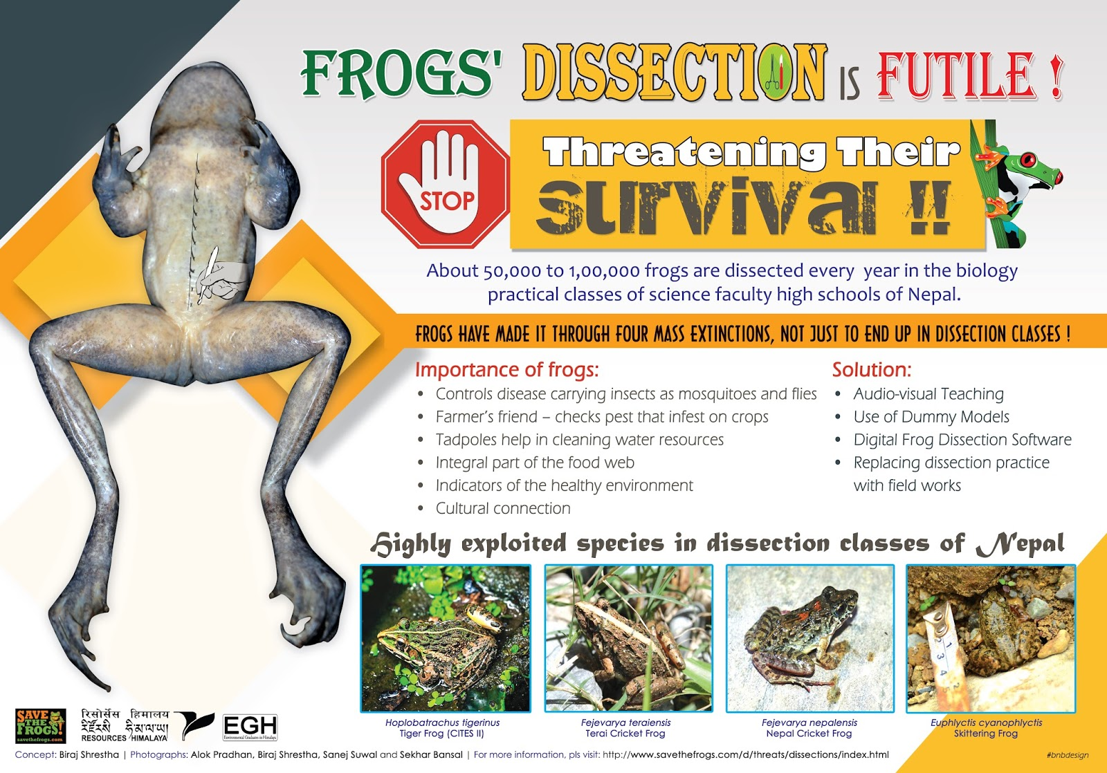 ANIMAL POSTER Frogs What/'s Up?