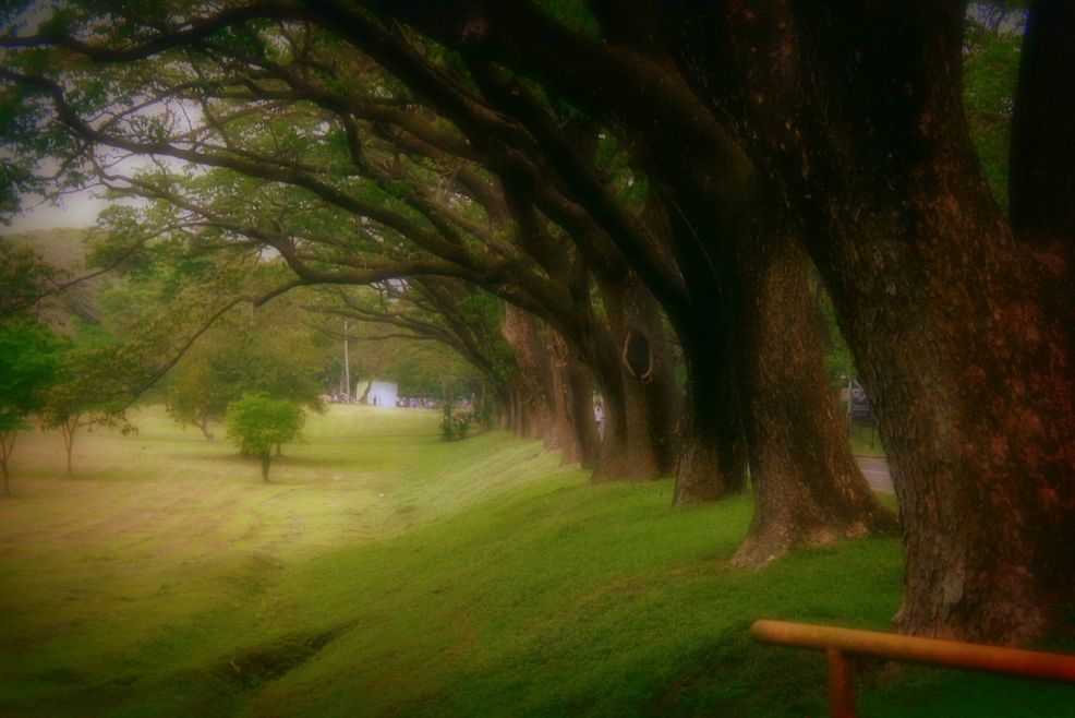 Trees inside UP Diliman