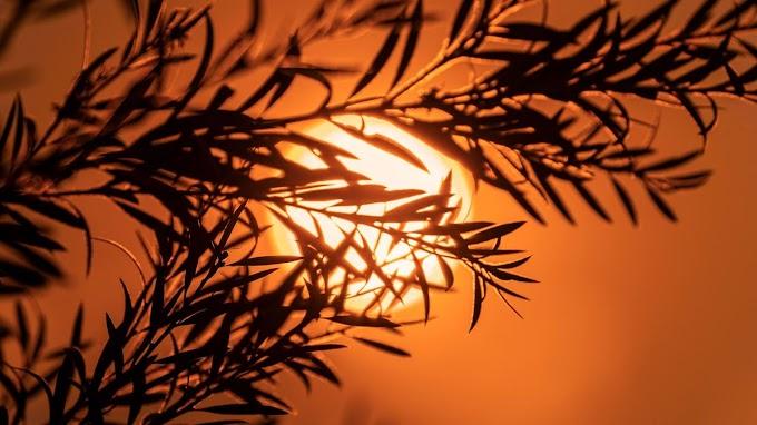 Plano de Fundo Celular Crepúsculo, Galho, Sol, Pôr do Sol
