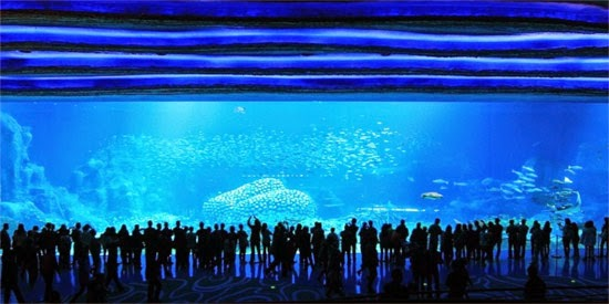 Chimelong Ocean Kingdom big tank