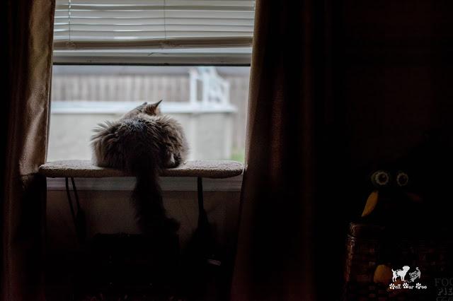 Bird/Squirrel TV (©Bell Fur Zoo)