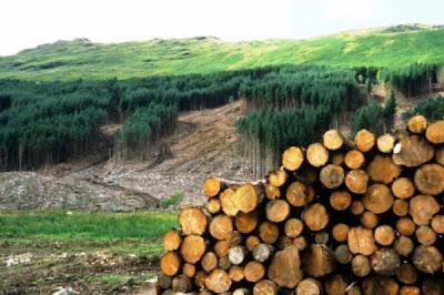 Resultado de imagen para causas de la deforestacion