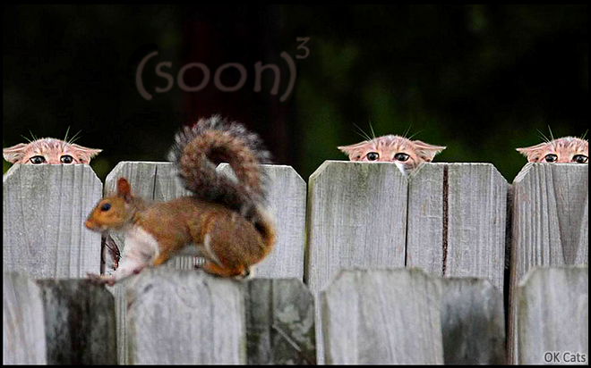 Photoshopped Cat picture • 3 cats on 'Hunting mode' plan to catch a brave squirrel. Soon... [ok-cats-site.com]