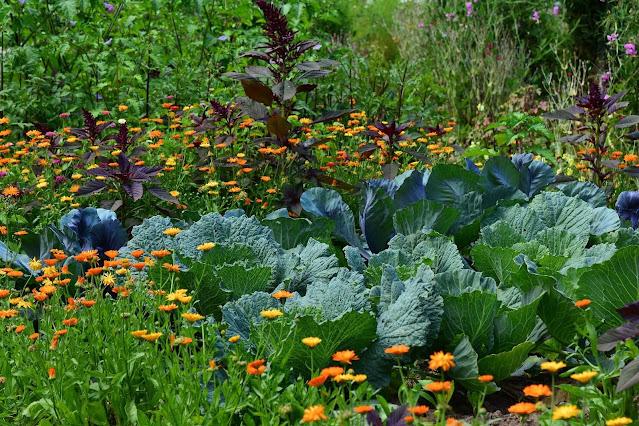 Memiliki kebun sendiri
