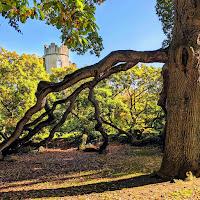 Best Dublin Walks: Malahide Castle Viewed through a gnarled tree