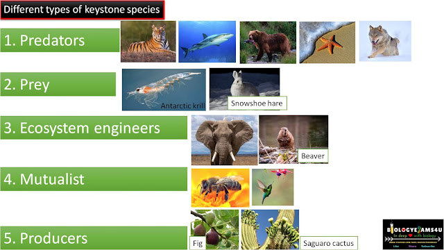 Different types of Keystone species