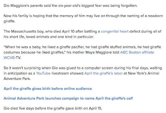 31 51 56 137 223 april the giraffe s calf the death of gio