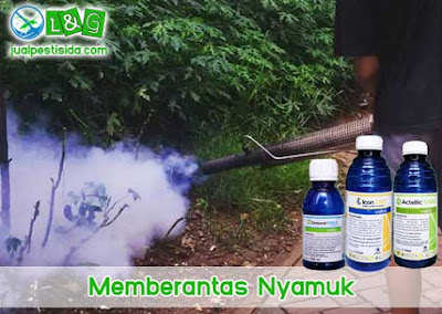 Memberantas Nyamuk