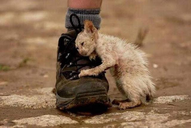 Crueldad animal castigada en Armenia