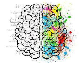 Das Gehirn mit seinen 2 spezialisierten Hälften