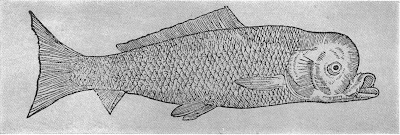 What's a pughead? A rare skeletal anomaly in fishes by Don Orth