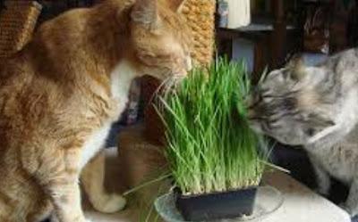 Alasan Kucing Makan Rumput dan Akar Tanaman